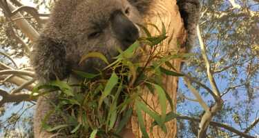 Featherdale Wildlife Park | Ticket & Tours Price Comparison