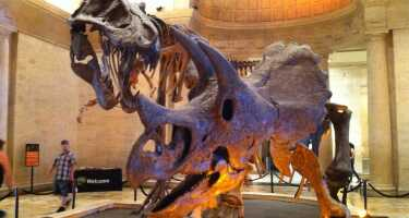 Natural History Museum of Los Angeles County | Ticket & Tours Price Comparison