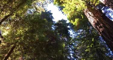 Muir Woods National Monument | Online Tickets & Touren Preisvergleich