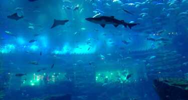 Dubai Aquarium & Underwater Zoo | Ticket & Tours Price Comparison