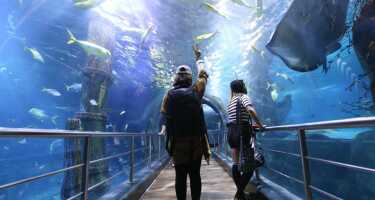 SEA LIFE Melbourne Aquarium | Ticket & Tours Price Comparison