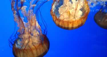 California Academy of Sciences | Online Tickets & Touren Preisvergleich