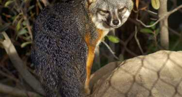 Santa Barbara Zoo | Ticket & Tours Price Comparison