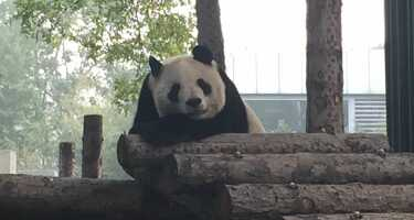 Beijing Zoo | Ticket & Tours Price Comparison